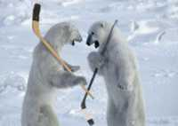 Jackson Polar Bear Hockey Club