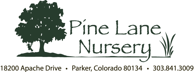 Pine Lane Nusery Logo