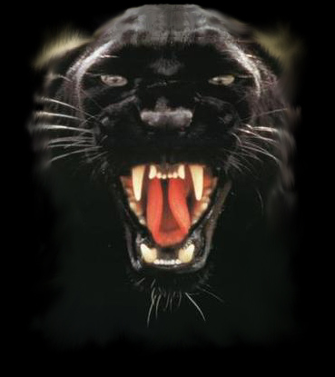 Bruton Panther Logo