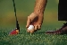 golftee