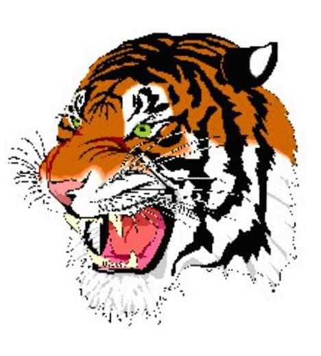 Tiger Head - smaller no page background