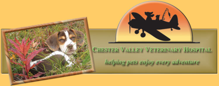 CHESTER VALLEY VETERINARY HOSPITAL
