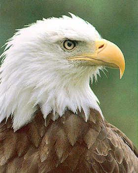 TRUMBULL EAGLES: Eagle News