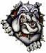 bull dog