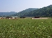 Emporium Field