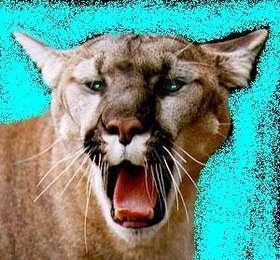 cougar_5.jpg