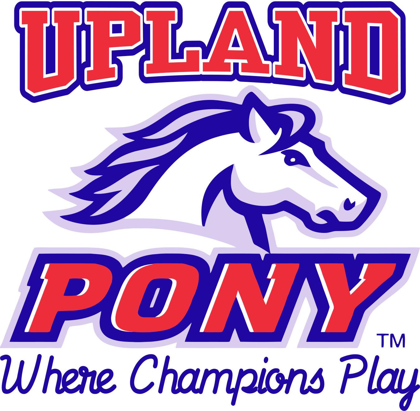 Upland Pony