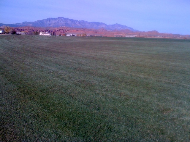 Field Pic #1