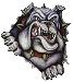 bulldog4