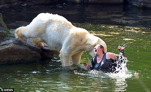 Bear Gets Ya