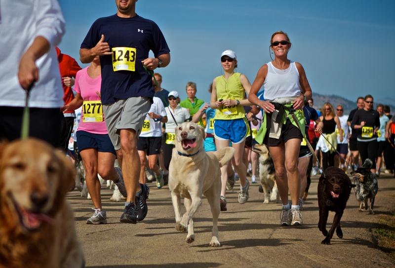 Image result for dog 5k